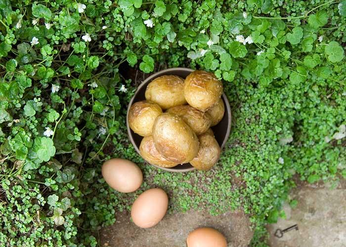 Таинственный сад  Фрэнсис Элиз Бёрнетт 1911  700 х 499