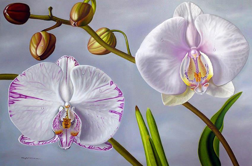 Эллери Гутьеррез Орхидеи 850 х 562