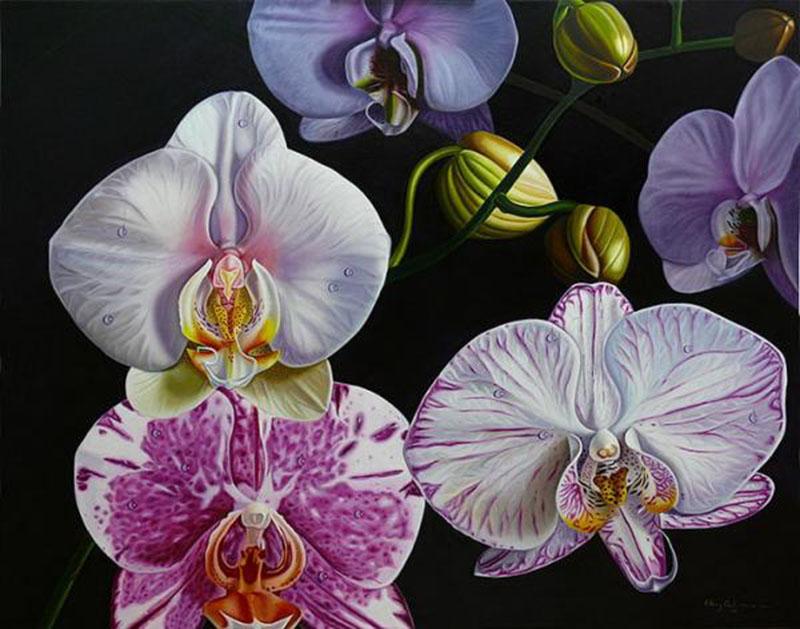 Эллери Гутьеррез Орхидея фаленопсис 800 х 629