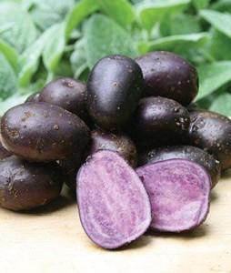 картофель Виталот 450 х 531