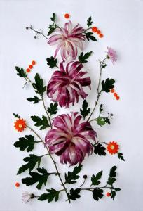 луковые хризантемы 505 х 740