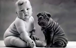 забавные фотосходства-дети и собаки