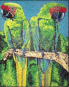 зеленый ара 450 х 564